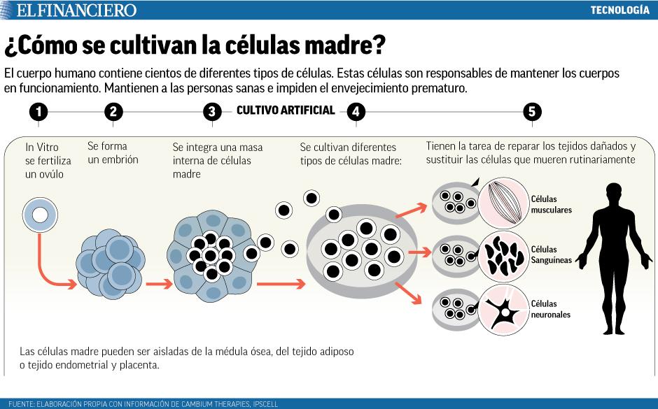 celulas_madres.